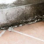 mold-repair
