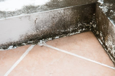A Guide to Handling Mold with the Help of Remediation Experts