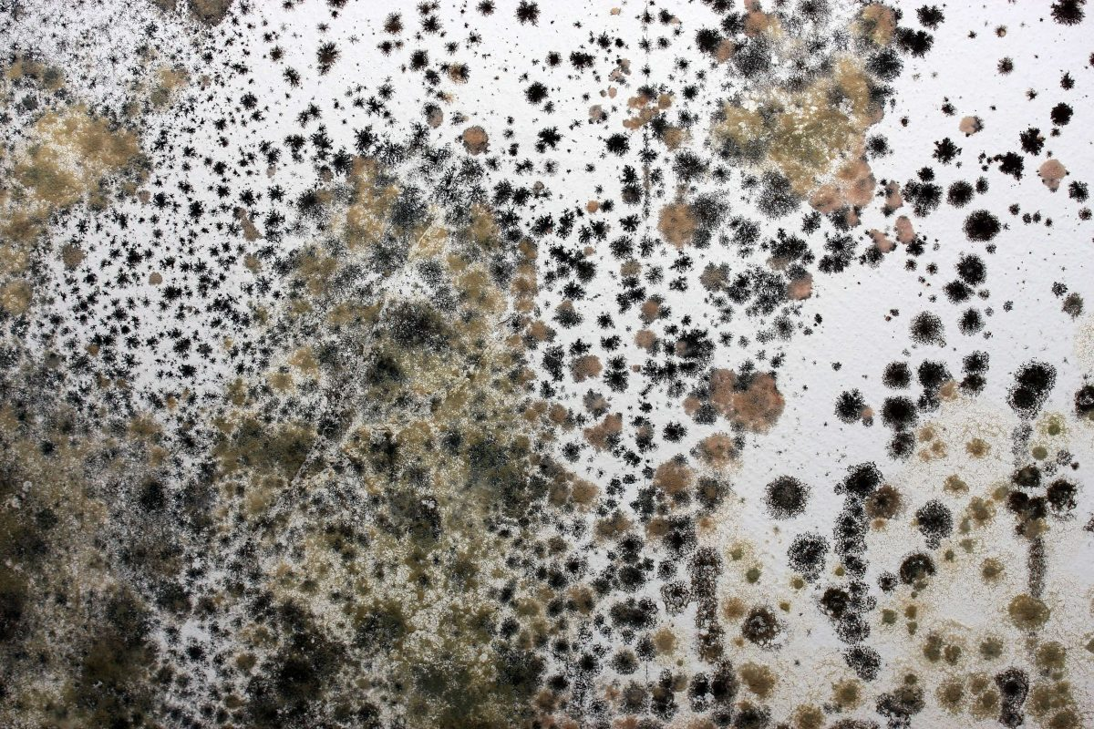 How to Tackle Mold Growth in Your Commercial Property